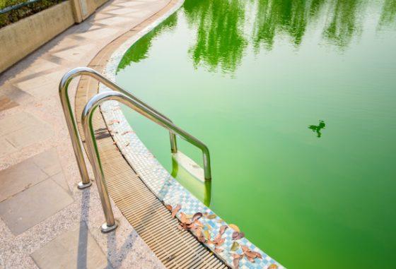 Comment hiverner sa piscine flipr for Piscine verte