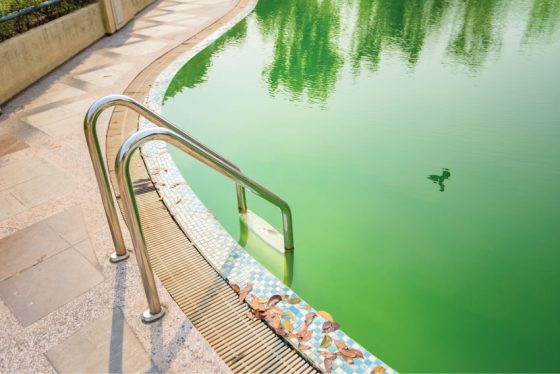 Nettoyer une piscine verte